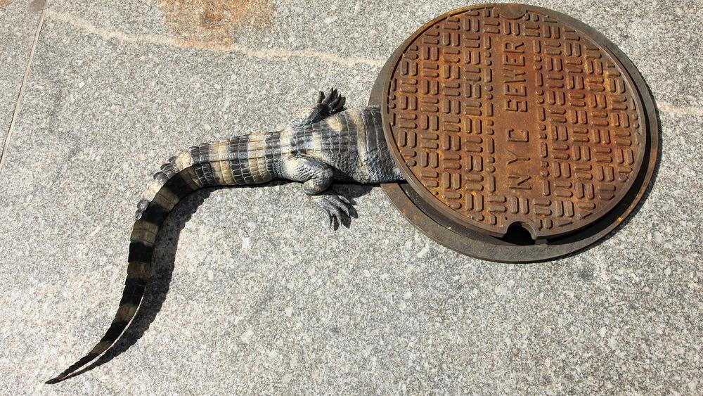 prop alligator entering a sewer