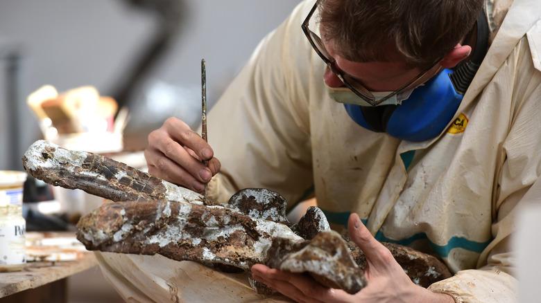 Исследование окаменелостей динозавров