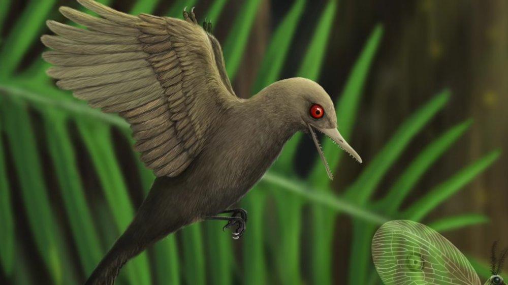 Hummingbird dinosaur