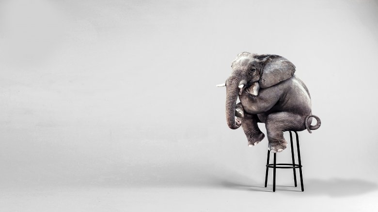 Elephant looking jaunty