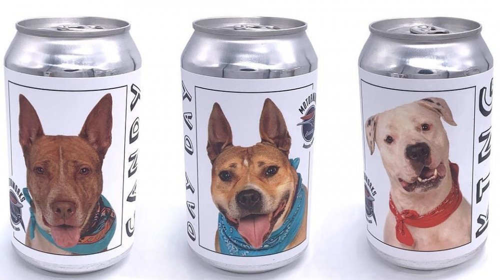 Missing dog beer can