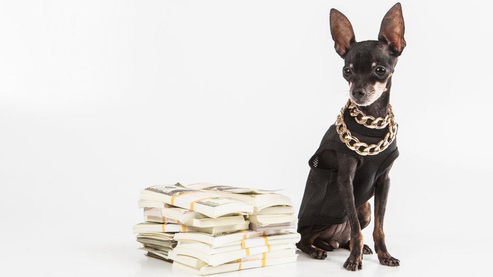 Dog with money