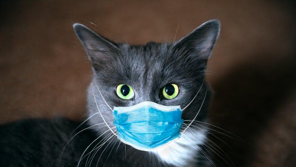 Cast in medical mask