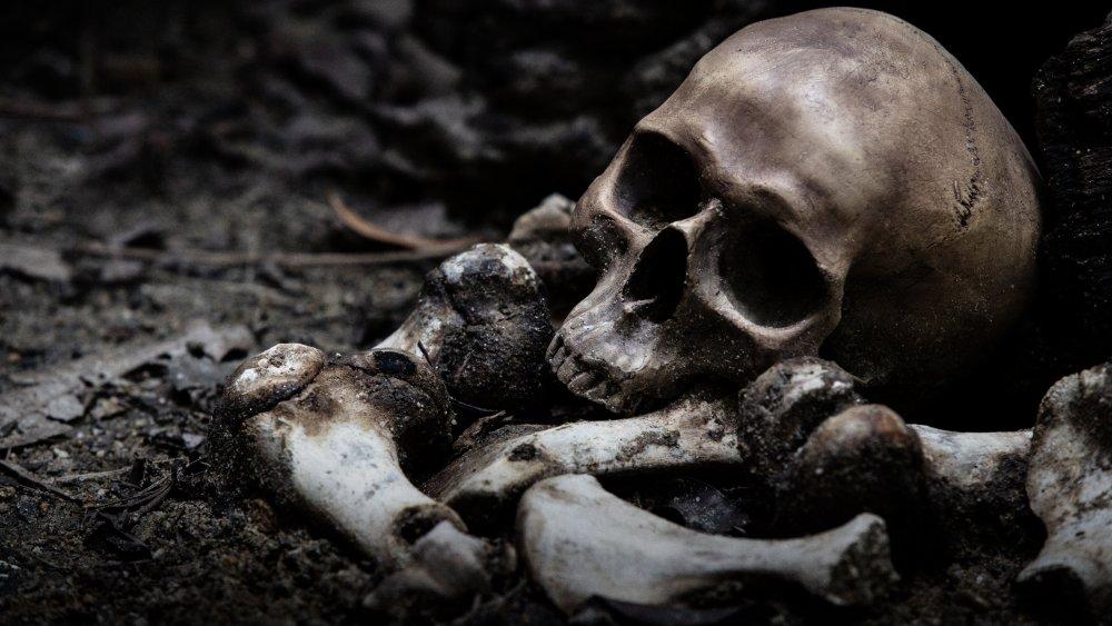 bone skulls vampire