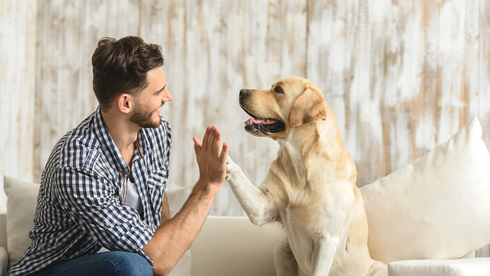 Dog with person