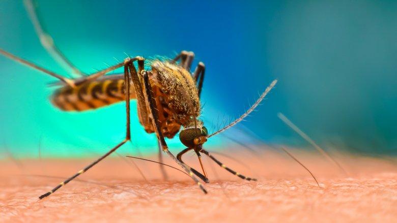 Mosquito, Bite