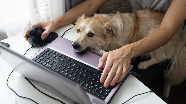 Dog leaning on computer