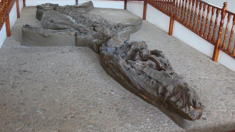 Kronosaurus fossil