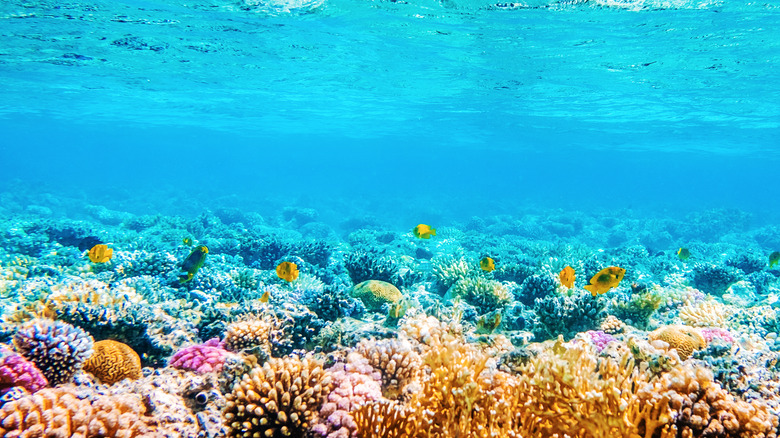 Tropical ocean ecosystem