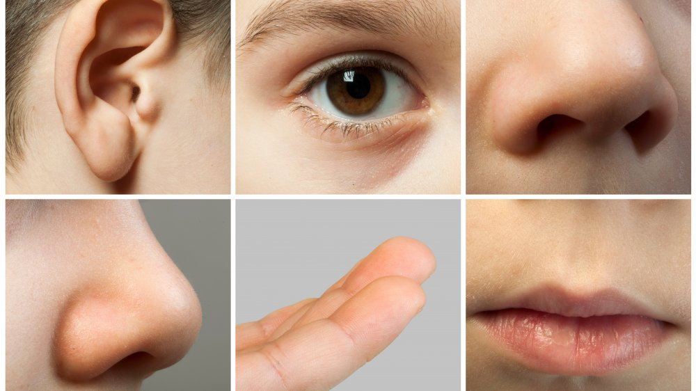 Close-up photographs of different sensory organs, including eyes, ears, nose, and mouth.