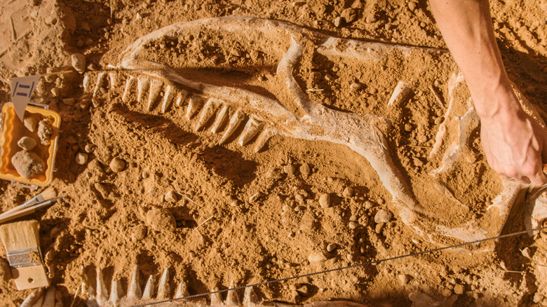167-million-year-old fossils