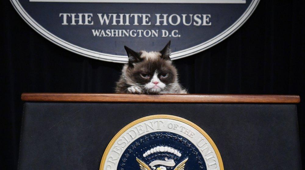 grumpy cat white house