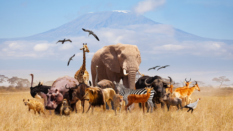 group of various animals