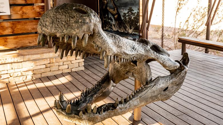 skull replica crocodile