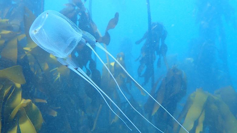 box jellyfish forest underwater