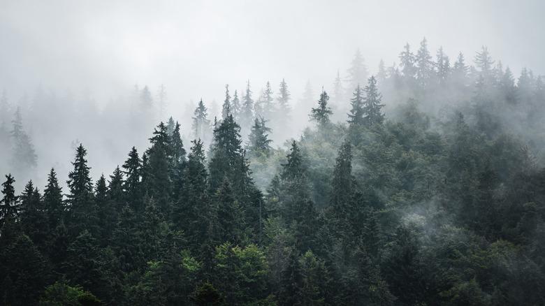 mountains misty
