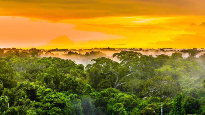 Brazilian Amazon rainforest sunset