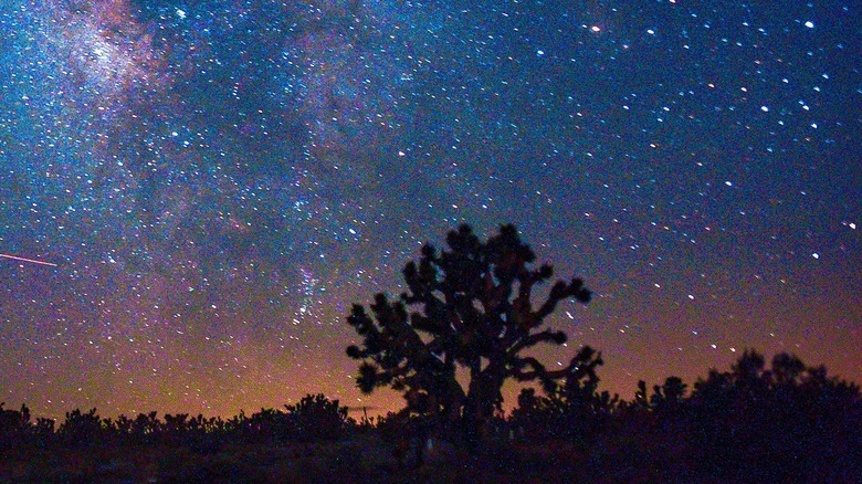 Milky Way and Joshua Trees Mojave National Preserve Kelso California