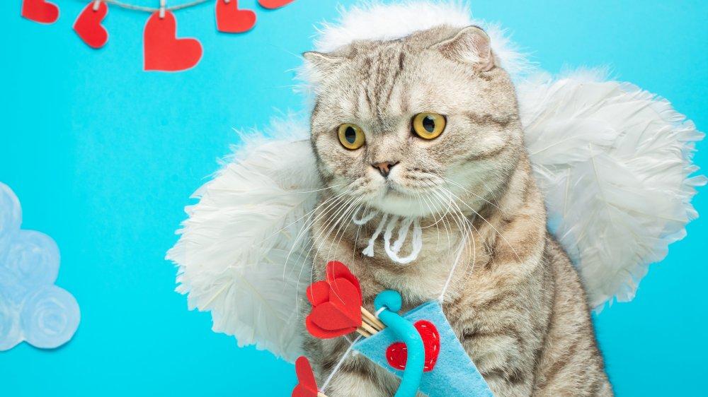 It's cupid cat!