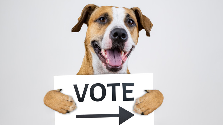 dog holding a vote sign