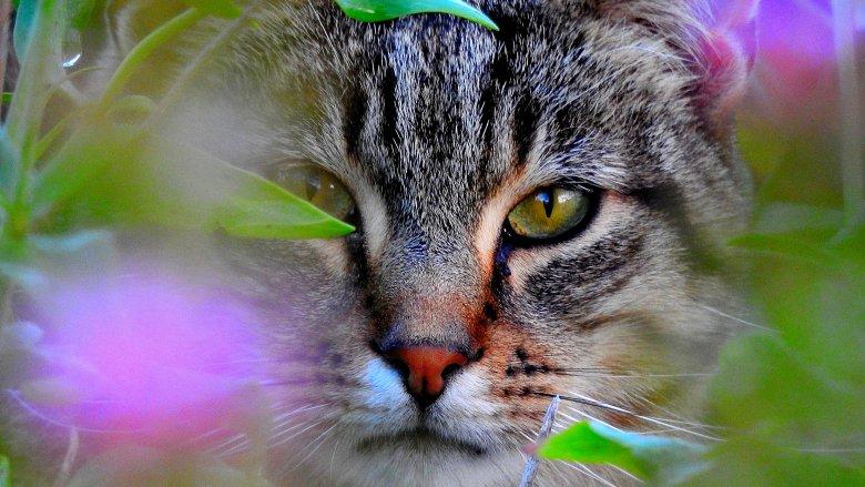 cat stalking you