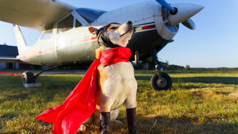 a very brave dog