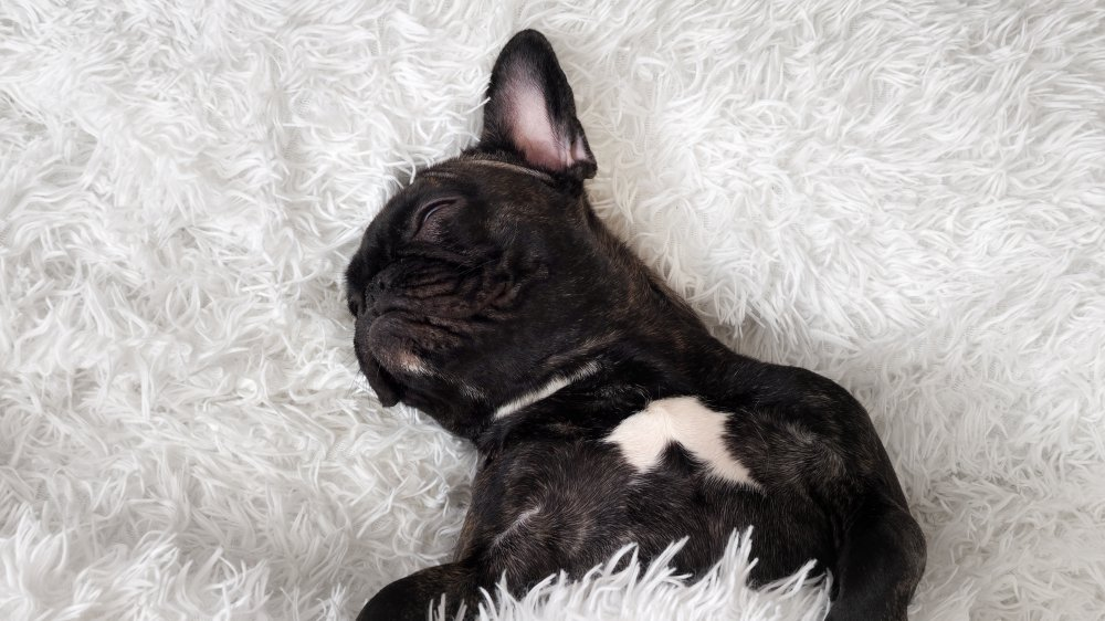 Calmest dog