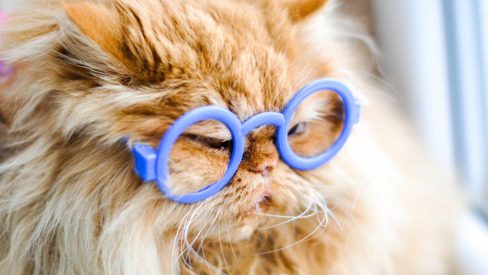 cat glasses