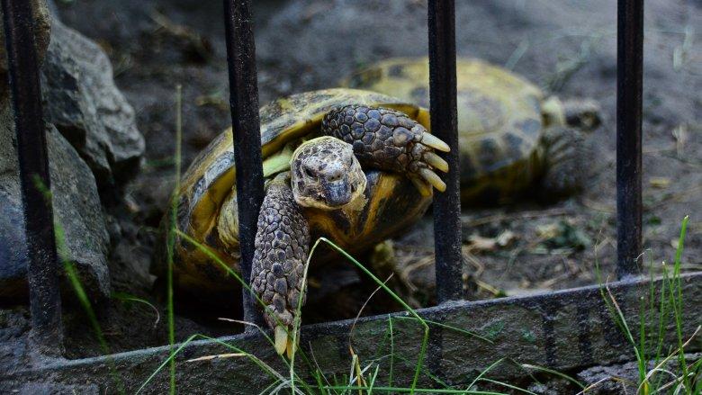 turtle escape