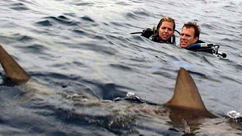 Open Water movie