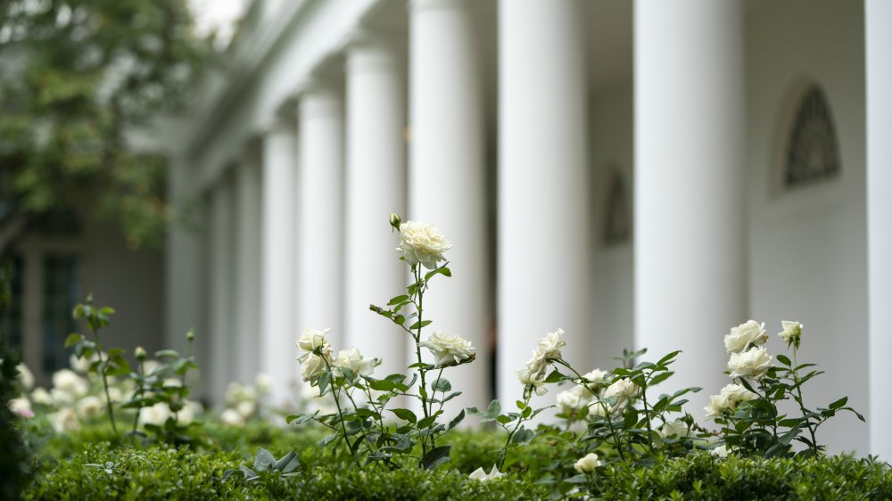 White House Rose Garden after renovations