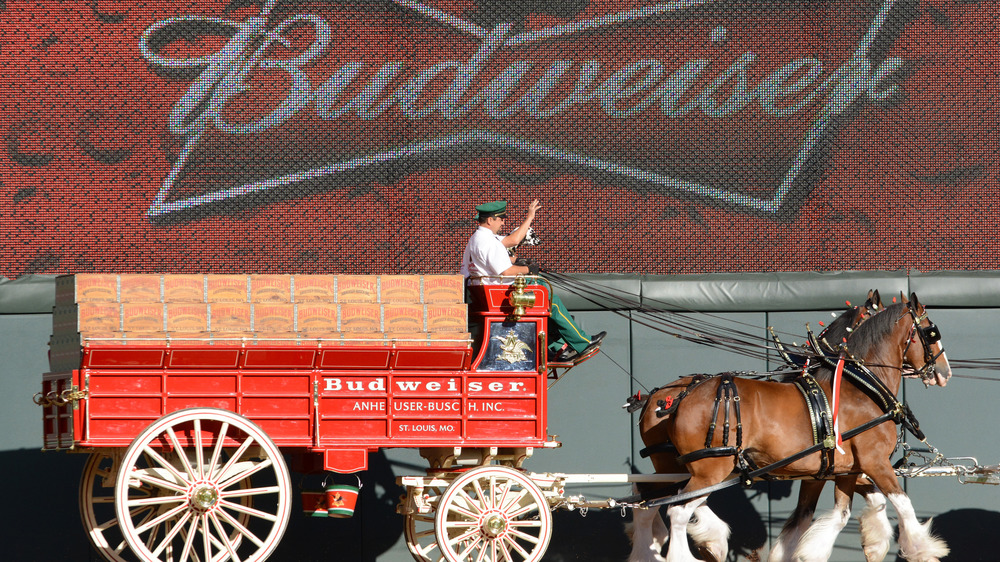 Budweiser Clydesdales pulling a carriage