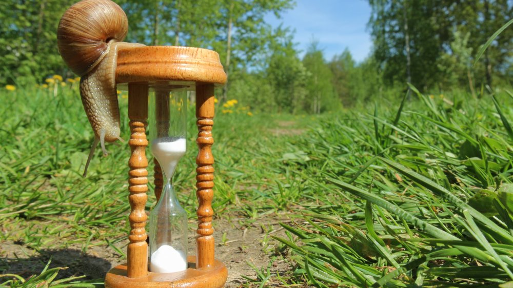 Snail, Hourglass