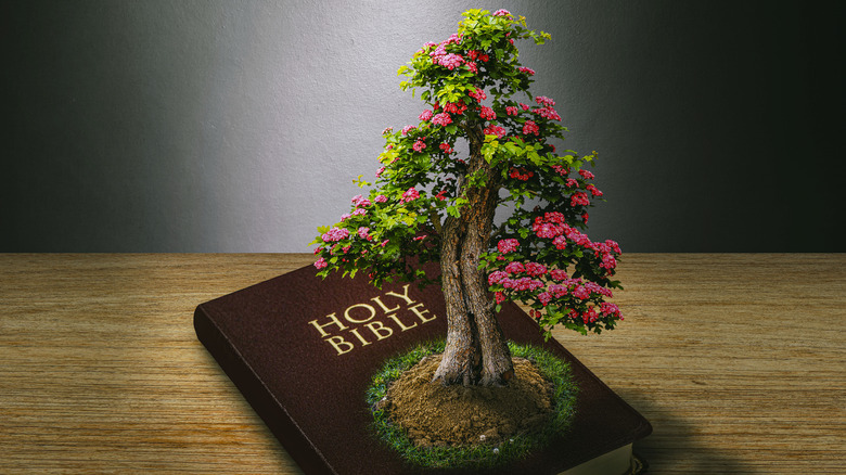Tree growing on a Bible