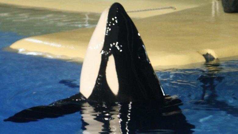 keiko free willy whale