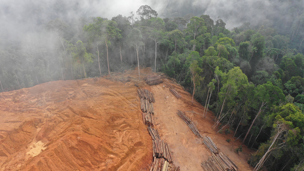 Rainforest being cleared in Borneo to make room for oil palms