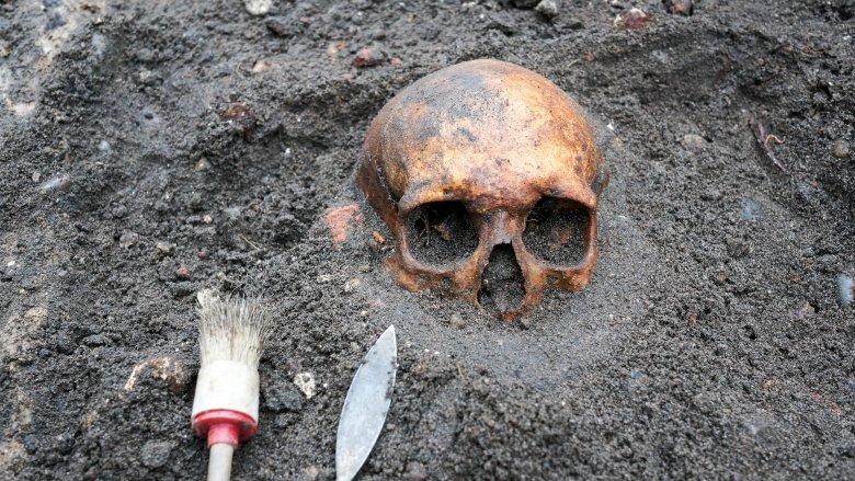 Archaeology, skull, dig