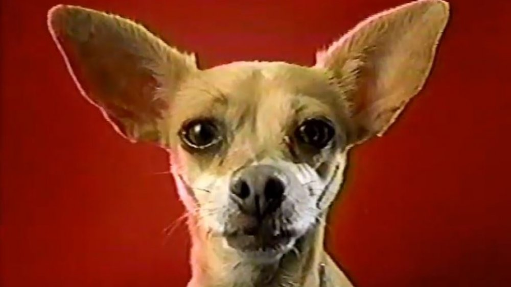 Gidget Taco Bell dog, controversial corporate mascot