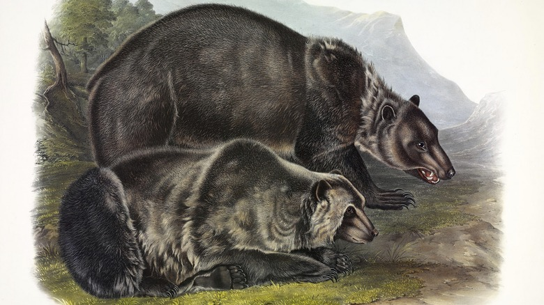 illustration of Grizzly bears in the forest