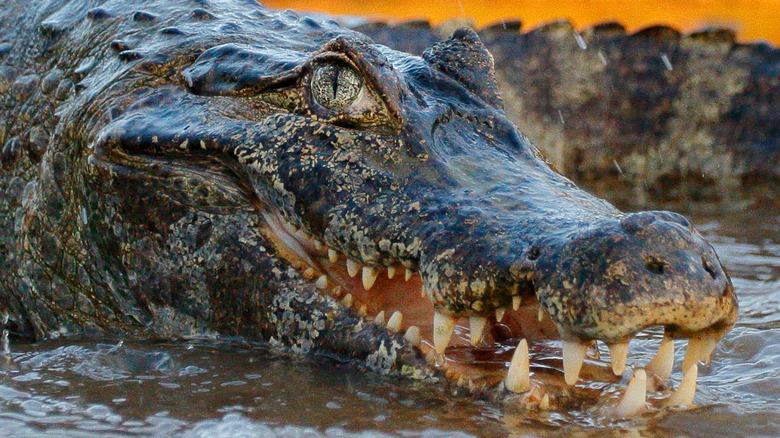 river crocodile danger dinosaur