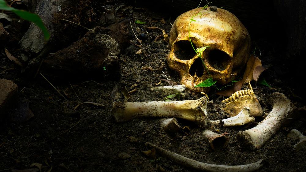 vintage skull buried in earth