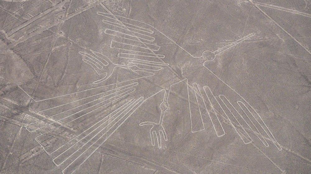 The condor in Peru