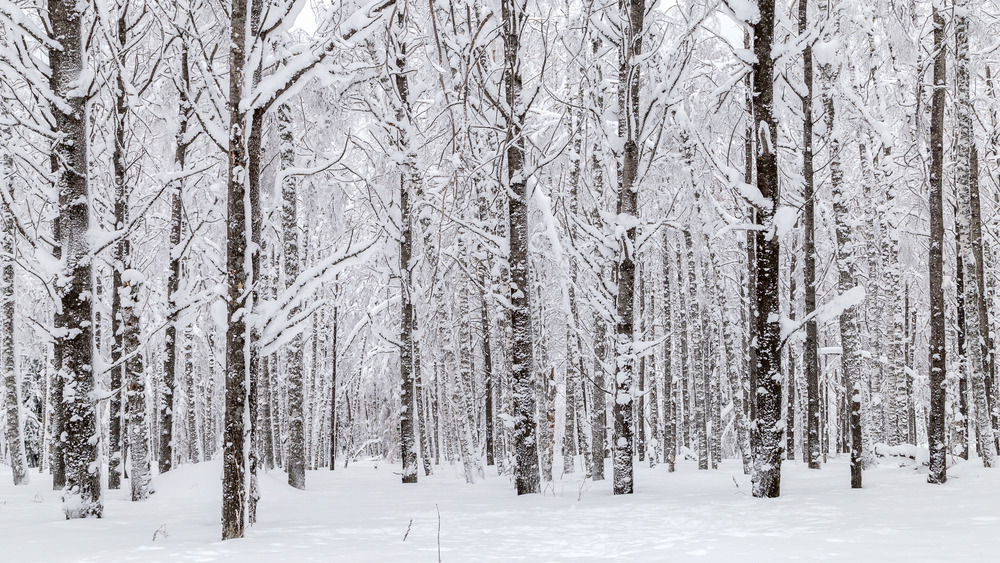 Trees in the Ural mountains