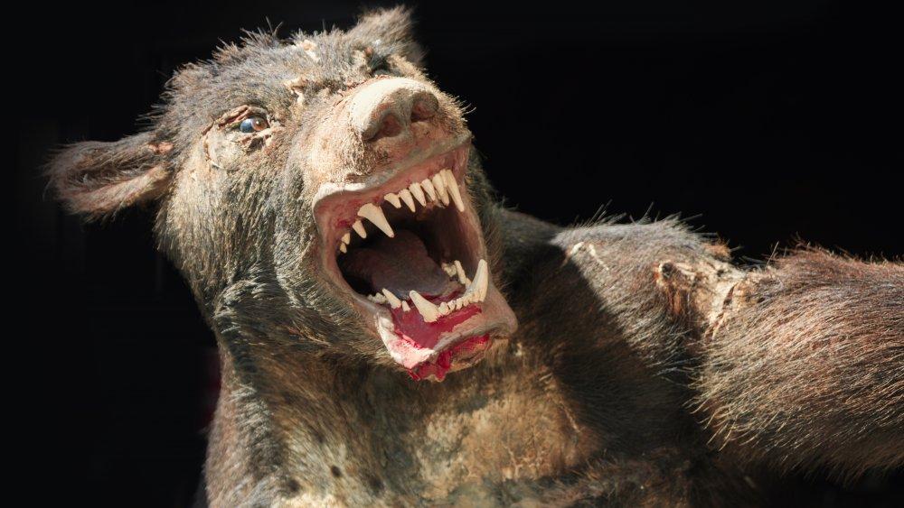 real life werewolf france