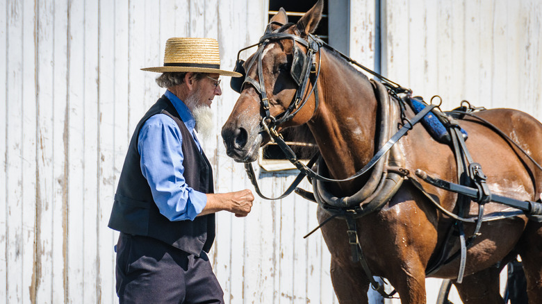 amish man with horse