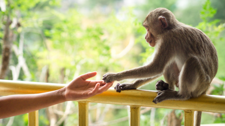 human and monkey
