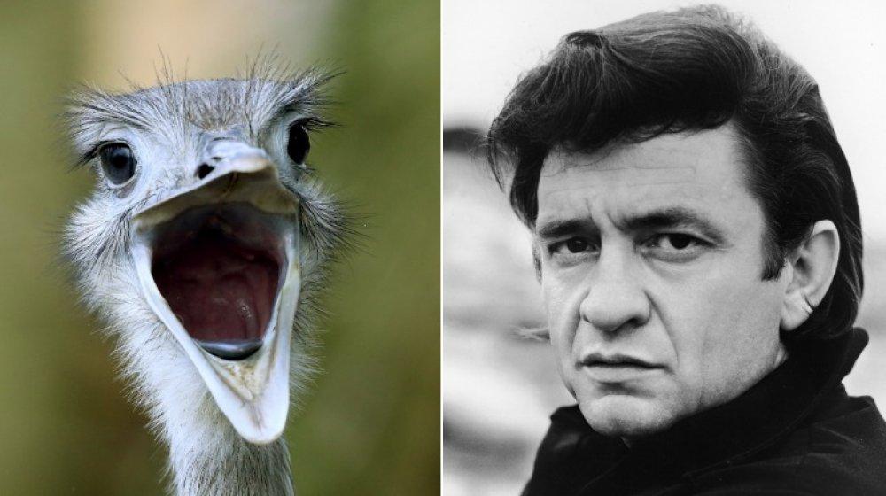 Ostrich, Johnny Cash