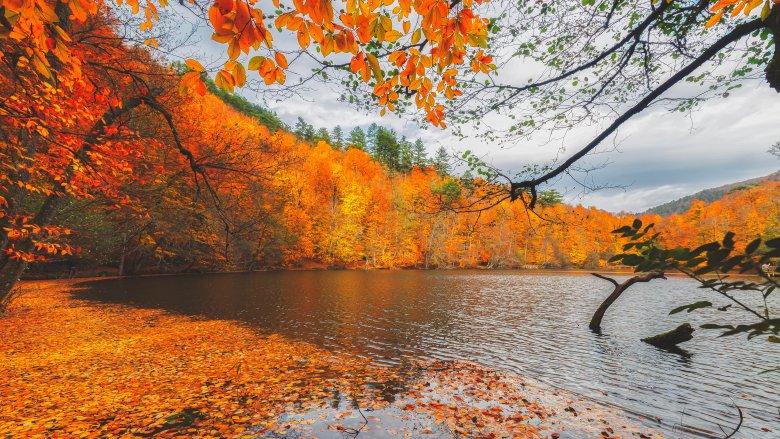 Autumn leave colors