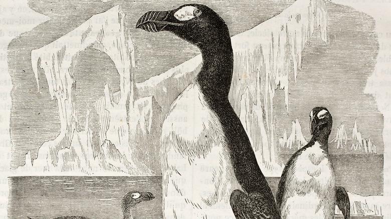 great auk penguin