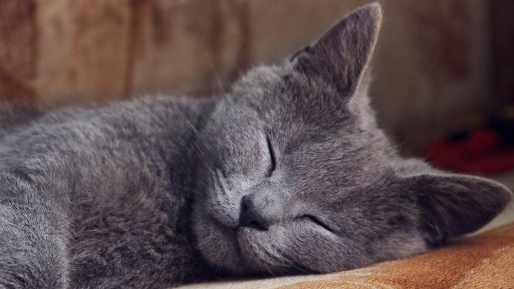 Cat in its sleep